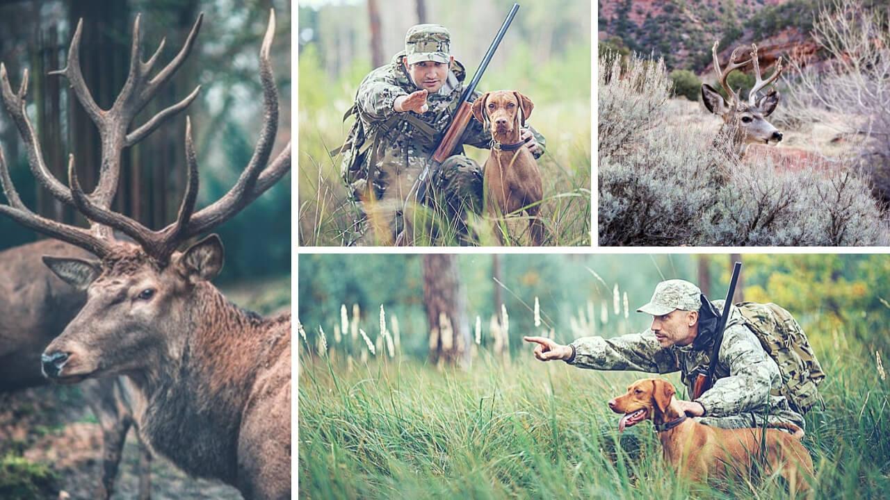 gave til jæger